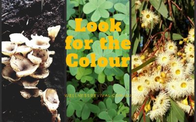 Look for the Colour and get yourself through the Winter Blues